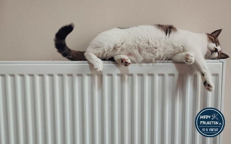 kat op een radiator
