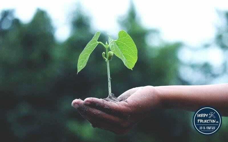 Plantje in een hand